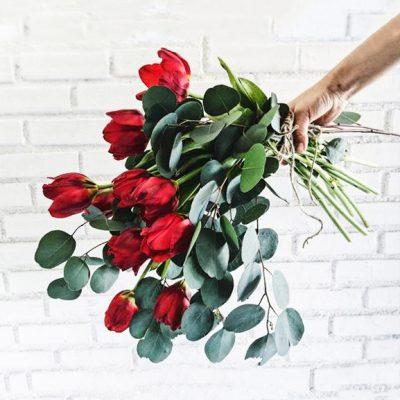 ดอกทิวลิป สดใสอ่อนหวาน