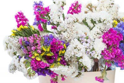 ดอกสแตติส รักที่มั่นคงตลอดไป